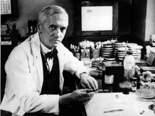 Alexander Fleming découvrit la pénicilline, un antibiotique sécrété par le champignon Penicillium notatum. Pour cette découverte, il a partagé le prix Nobel de physiologie ou médecine avec Howard Walter Florey et Ernst Boris Chain en 1945. © Wikimedia, CC, DP