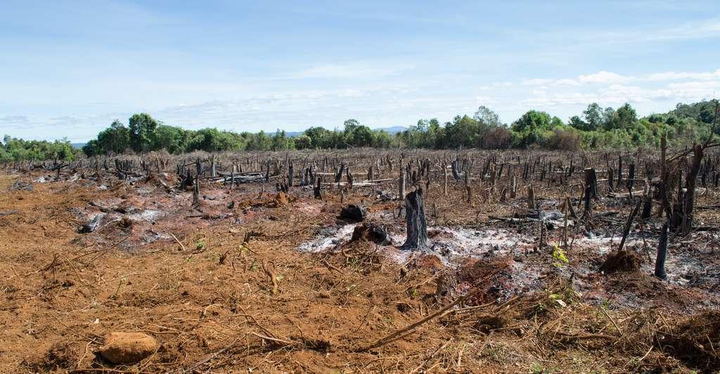 Jusqu'en août 2020, la déforestation de l'Amazonie était déjà supérieure de 2.400 km2 à celle de 2019. © Kristof, Adobe Stock
