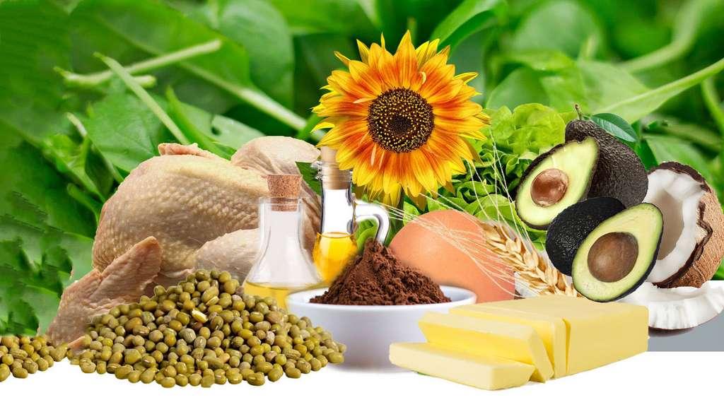 Les vitamines, des petites molécules aux grandes responsabilités