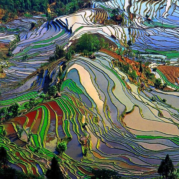 Rizières en terrasses des Hani de Honghe, dans le Yunnan, en Chine. © Jialiang Gao, Wikimedia Commons, GFDL, CC by-sa 2.5