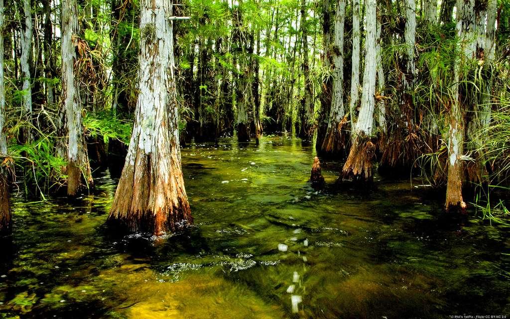 Le parc national des Everglades, en Floride