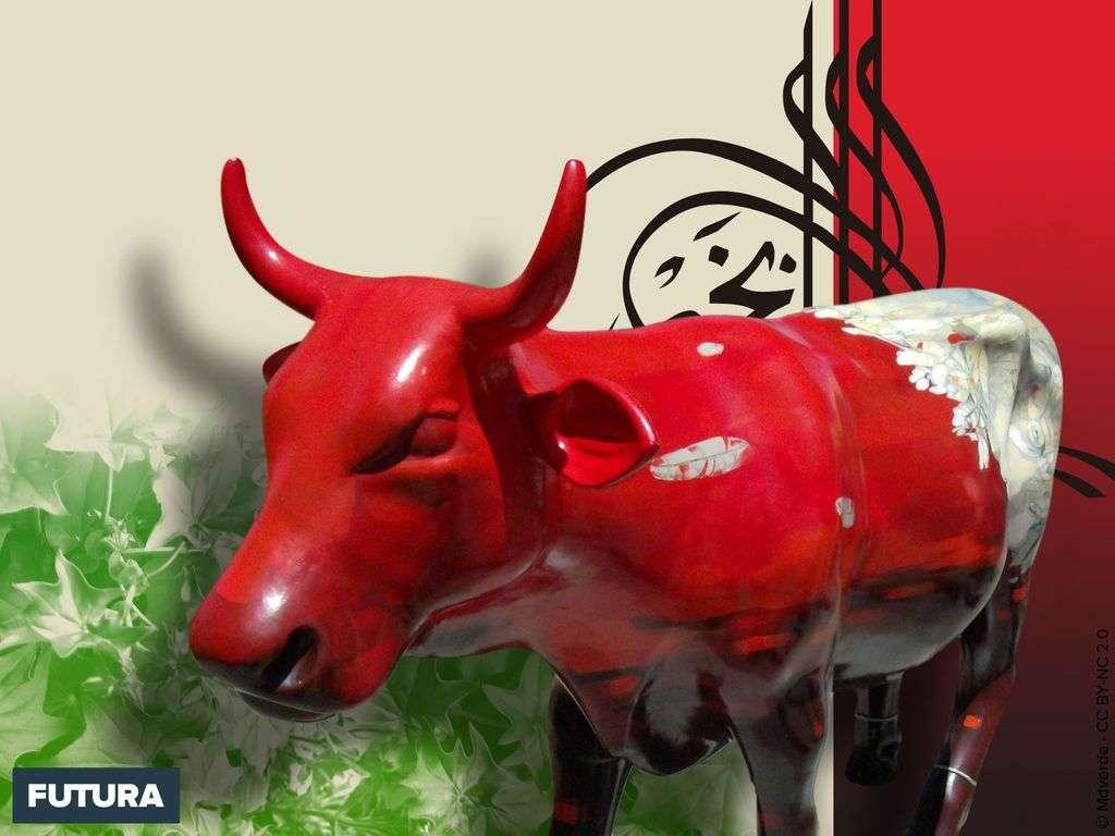 Vache parade - Costa Rica