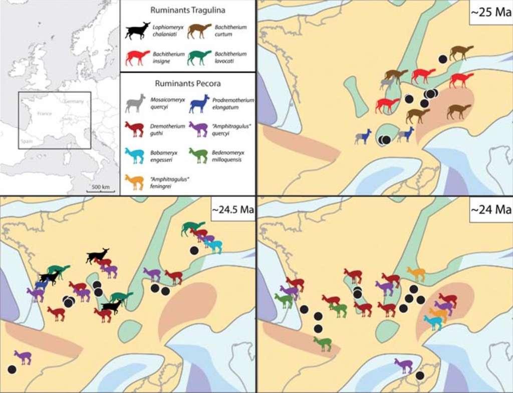 Répartition et évolution des faunes de ruminants entre 25 et 24 millions d'années (Ma) en Europe de l'ouest (les Pecora immigrants sont tournés vers la gauche, les ronds noirs correspondent aux sites fossilifères). © Bastien Mennecart, CR2P