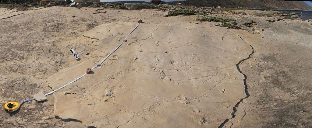 En Crète, des empreintes de pas remettent en cause l'évolution humaine. Ici, vue générale des 29 empreintes de pas en question. © Trachilos Andrzej Boczarowski