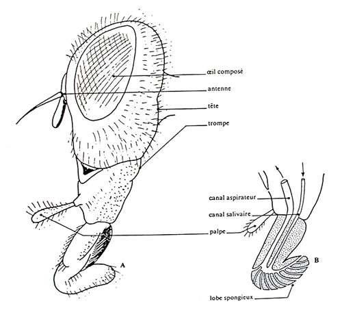Tête de profil Reproduction et utilisation interdites