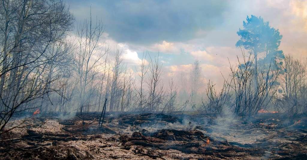 Des analyses de charbon de bois sédimentaire et d'autres indicateurs d'une activité incendie montrent que durant tout l'Holocène – soit les 10.000 dernières années de l'histoire de notre Terre –, les périodes les plus chaudes ont coïncidé avec des incendies plus nombreux et plus importants. © Vladimir Ya, Adobe Stock