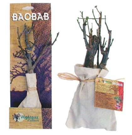 Kit Baobab prêt à planter de 1,5 ans et 6 ans disponible dans certaines jardineries ou sur Internet. © Végétaux d'Ailleurs International
