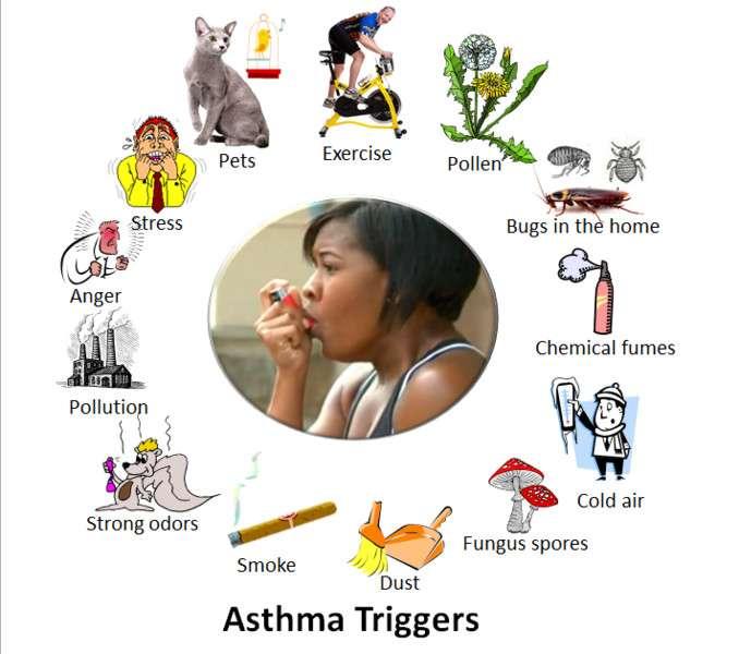 Les situations qui déclenchent l'asthme sont très diverses : exercice physique, pollen, produits chimiques, moisissures, poussière, pollution, animaux, etc. L'énervement et la fatigue peuvent aussi entrer en compte. © 7mike5000, Wikimedia Commons, CC by-sa 3.0