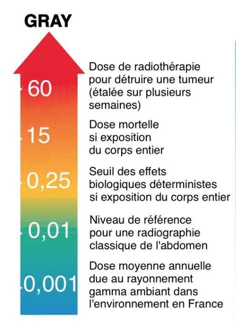 Exemples d'ordres de grandeurs de doses absorbées (source ASN). © M.B.