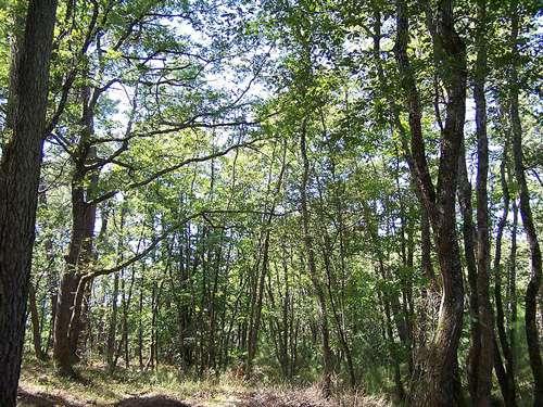 Forêt de la Coubre. © littoral17 CCA-Share Alike 2.5