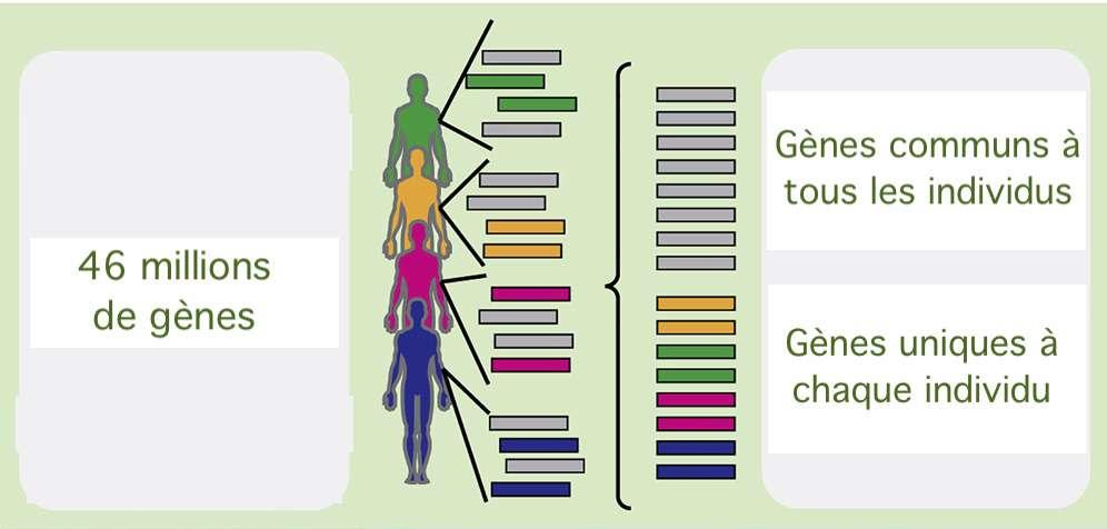 Sur les 46 millions de gènes répertoriés auprès de 3.600 personnes, la moitié sont uniques à chaque individu. © Braden Tierney et al, Cell Host & Microbe, 2019