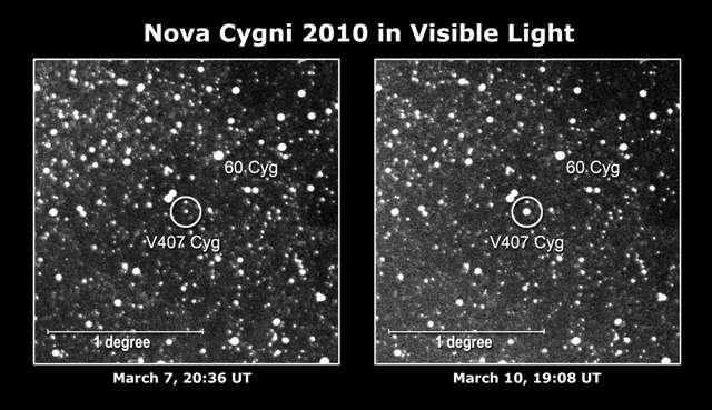 Des astronomes amateurs japonais ont pris une image de Nova Cygni 2010. La nova (dans le cercle à droite) était 10 fois plus brillante que l'étoile avant sa phase éruptive et atteignait une magnitude 6,9, juste en dessous du seuil de visibilité à l'œil nu. Crédits : Nasa-K. Nishiyama et F. Kabashima/H. Maehara, Université de Kyoto