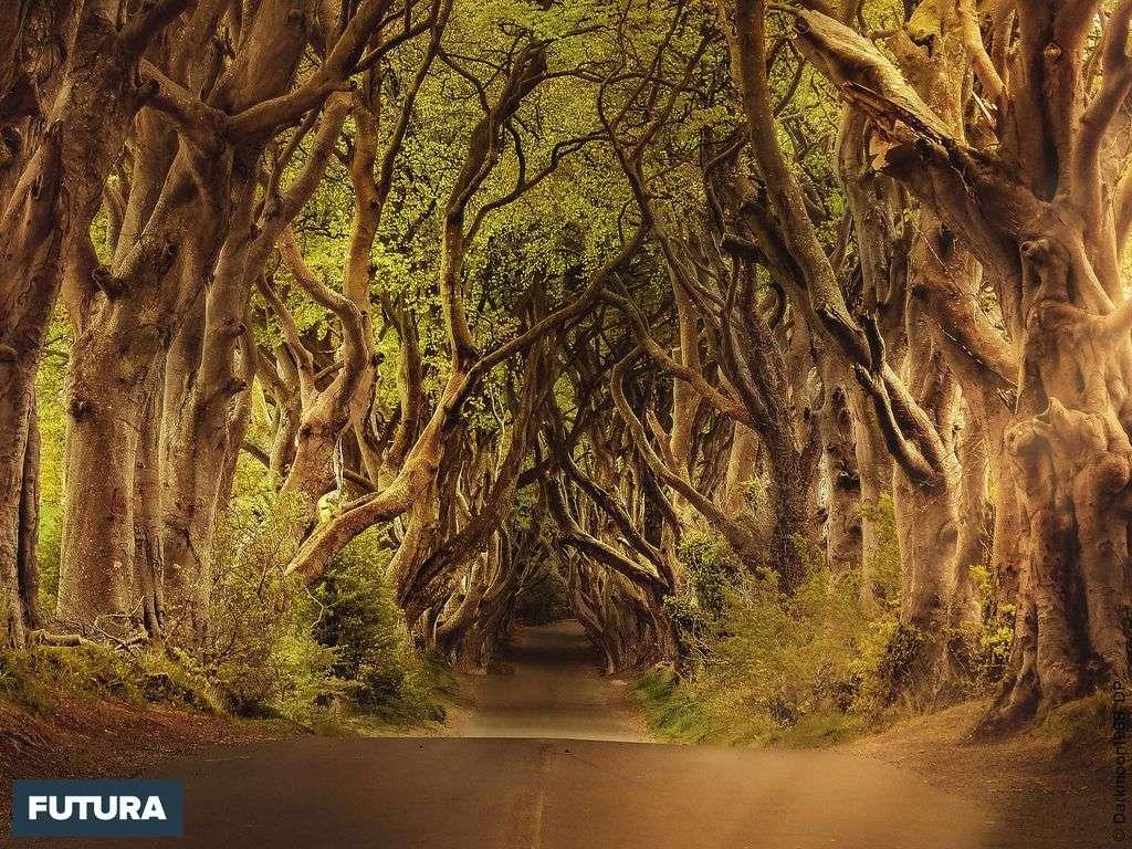 Dark Hedge un site étrange en Irlande, rendu célèbre grâce à la série du Trône de Fer !