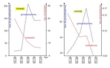 La production d'oestrogènes (oestradiol) et de testostérone au cours de la vie.Les gonadotrophines sont des hormones produites par l'hypophyse. Lorsque la concentration en hormones sexuelles chute, le taux de gonadotrophines augmente. Source : banque de schémas de SVT, académie de Dijon. http://svt.ac-dijon.fr/schemassvt/article.php3?id_article=573