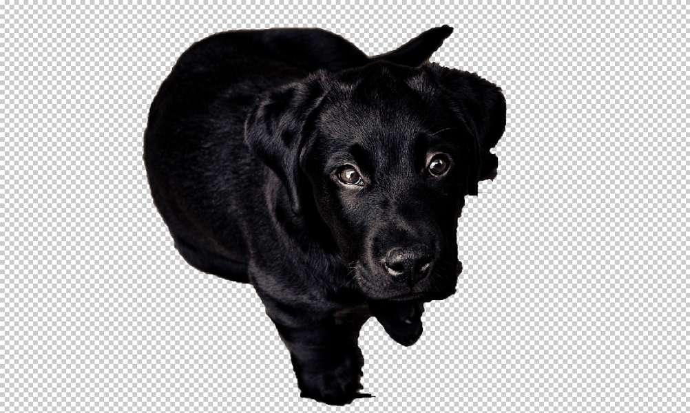 Une image détourée ne comporte qu'un objet, l'absence de fond est matérialisé par les cases grises et blanches. © Adobe