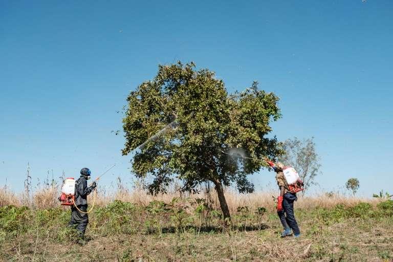 Des soldats ougandais pulvérisent arbres et plantes après l'arrivée d'essaims géants de criquets. © Sumy Sadurni, AFP