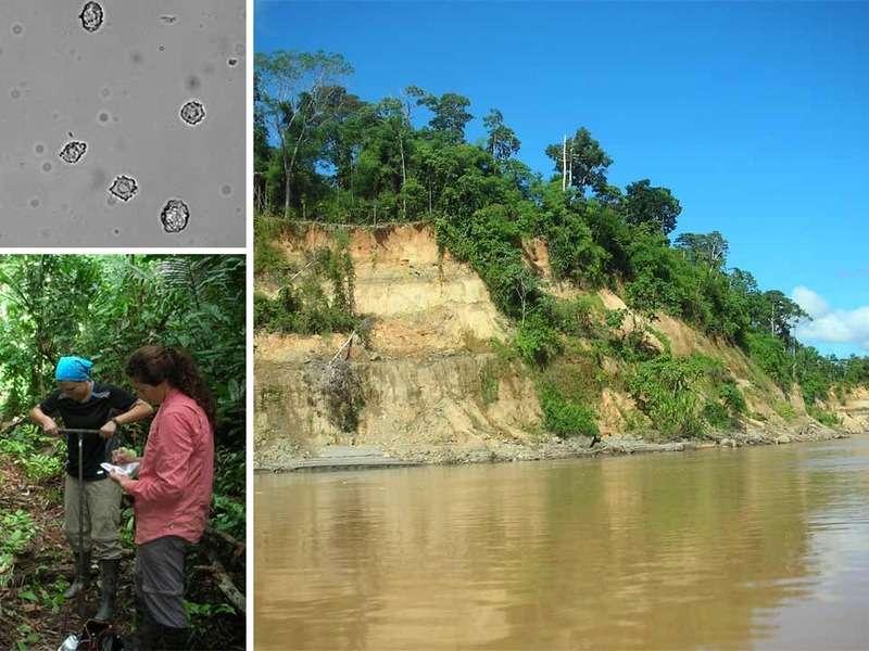 Les chercheurs ont réalisé des carottages (en bas à gauche) pour étudier l'impact de l'Homme sur la forêt dans l'ouest de l'Amazonie (paysage de droite) au cours de l'histoire. Dolores Piperno a notamment focalisé son attention sur les phytolithes contenus dans les échantillons (en haut à gauche). Ces structures proviennent de la biominéralisation et de l'accumulation de minéraux présents en trop grandes quantités dans les végétaux. Ils se composent d'oxalate de calcium (CaC2O4) et de silice (SiO2). © Crystal McMichael et Dolores Piperno