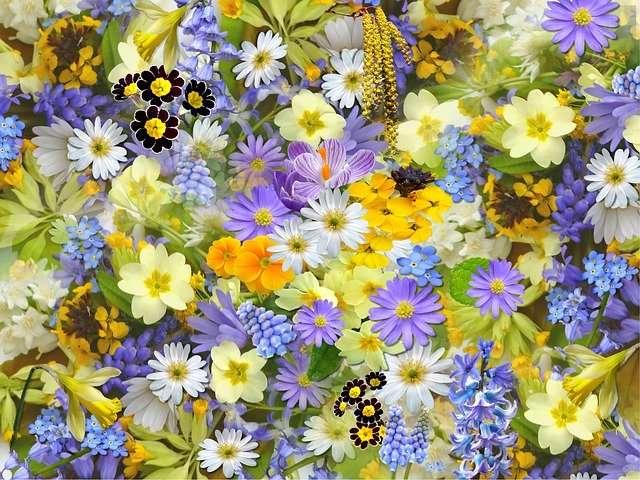 Prenons le temps d'admirer la beauté de la nature autour de nous. © Shirley810, Pixabay, DP