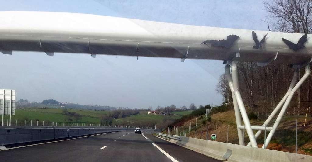 Aujourd'hui, les ponts ne servent plus qu'à permettre aux hommes de franchir un obstacle. Ils peuvent aussi aider les animaux comme ici avec ce chiroptéroduc destiné à permettre aux chauves-souris de traverser l'autoroute. © Gloumouth1, Wikipedia, CC by-sa 3.0