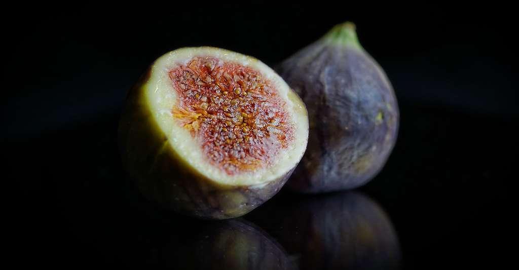 Le figuier : plantation et taille. Ici, des figues. © UweTuchen, Pixabay, DP