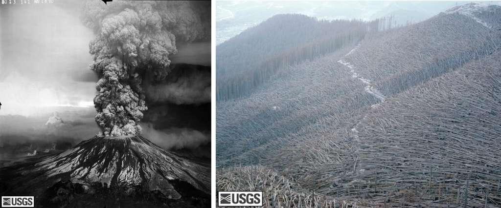 A gauche, le versant sud du Mont St Helens durant la phase paroxysmale, après l'éruption du 18 mai 1980. A droite, la forêt de North Fork Toutle, dévastée, le 22 août 1980. Crédit USGS/Cascades Volcano Observatory