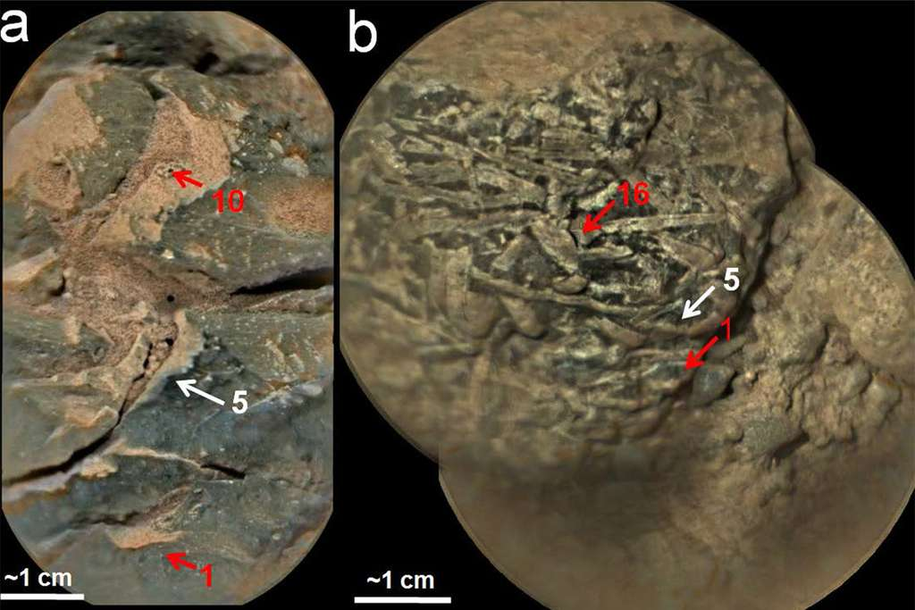 Deux échantillons de roches riches en oxyde de manganèse observé avec la ChemCam de Curiosity. © Nasa, JPL-Caltech