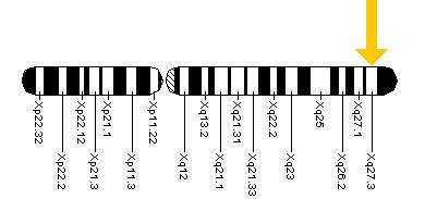 Localisation du gène FMR1. Une mutation sur ce gène entraîne le syndrome de l'X fragile. © NIH, domaine public, Wikimedia Commons