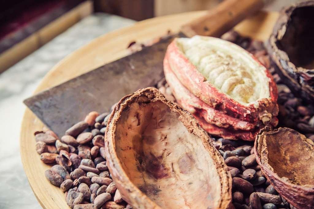 Les fèves de cacao apportent des flavanols. © Verity Snaps Photography, Shutterstock