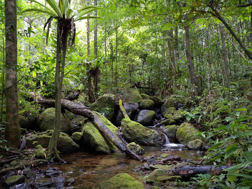 Dans les forêts des basses terres de Madagascar, une précieuse biodiversité