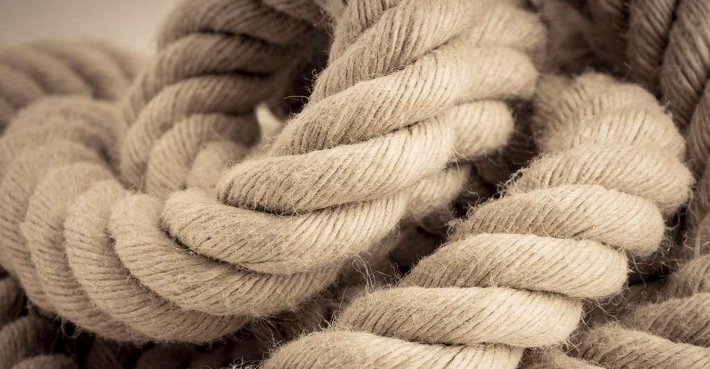 Comment faire une corde ? © Lars Hallstrom, Shutterstock