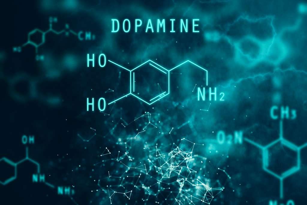La dopamine est un neurotransmetteur nécessaire au circuit de la récompense dans le cerveau. © peshkova, Adobe Stock