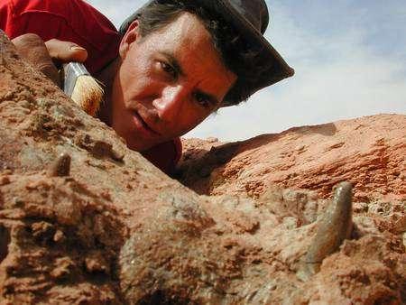 Une belle dent émerge du sol devant Paul Sereno. C'est celle de Kaprosuchus saharicus, une espèce nouvelle, surnommée Boarcroc. On reconnaît une canine. L'animal disposait de trois séries de dents de ce genre. Il mesurait six mètres et ressemblait à nos crocodiles. Mais il marchait – et même courait – sur quatre vraies pattes. © Mike Hettwer et National Geographic