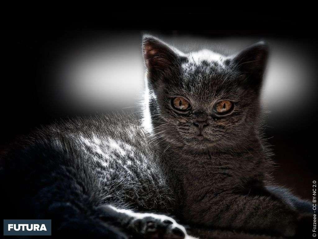 Chaton beauté noire