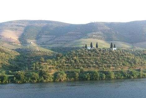 La somptueuse vallée du Douro et ses nombreuses vignes. © Fiona Starr, DR