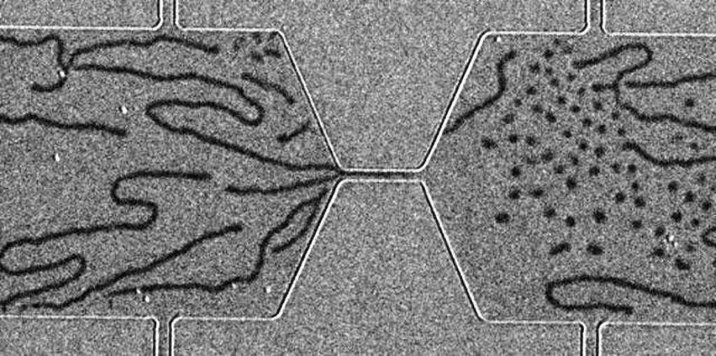 Un dispositif d'imagerie de domaines magnétiques par effet Kerr magnéto-optique a été utilisé pour réaliser cette image. On observe à gauche des bandes magnétisées dans un matériau magnétique et, à droite, des skyrmions sous forme de bulles. Pour plus de détails, voir les explications ci-dessous. © Wanjun Jiang, Argonne National Laboratory