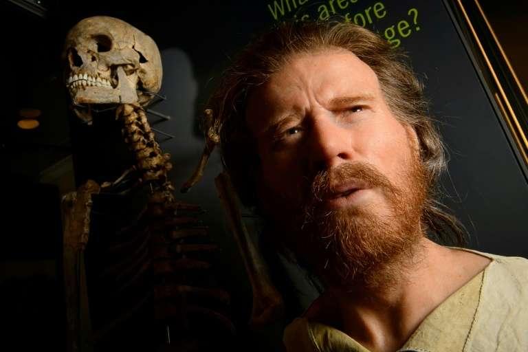 Le squelette d'un homme du Néolithique, avec la reconstruction de son visage, le 11 décembre 2013. © Leon Neal, AFP, Archives