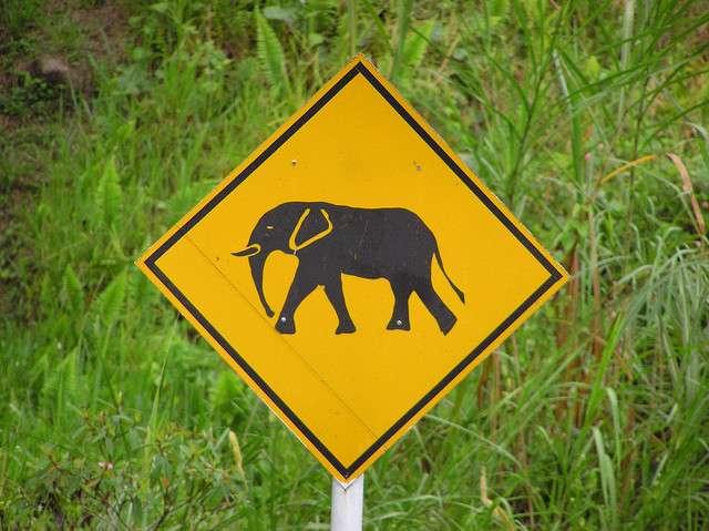 Des panneaux avertissant le risque de traversée de la route par des éléphants. À venir en Australie ? © dckf_$êr@pH!nX, Flickr, cc by nc nd 2.0