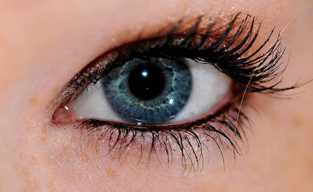 Les yeux bleus seraient apparus après une mutation spontanée il y a quelques millénaires, et le caractère, jugé attirant, se serait répandu dans diverses régions du monde. © Garretttaggs55, Wikipédia, cc by sa 3.0