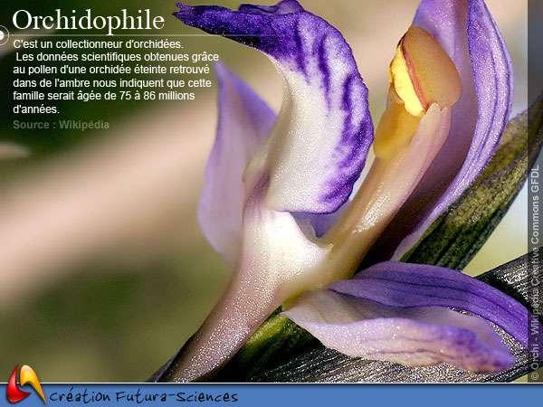 Orchidophile - Orchidées