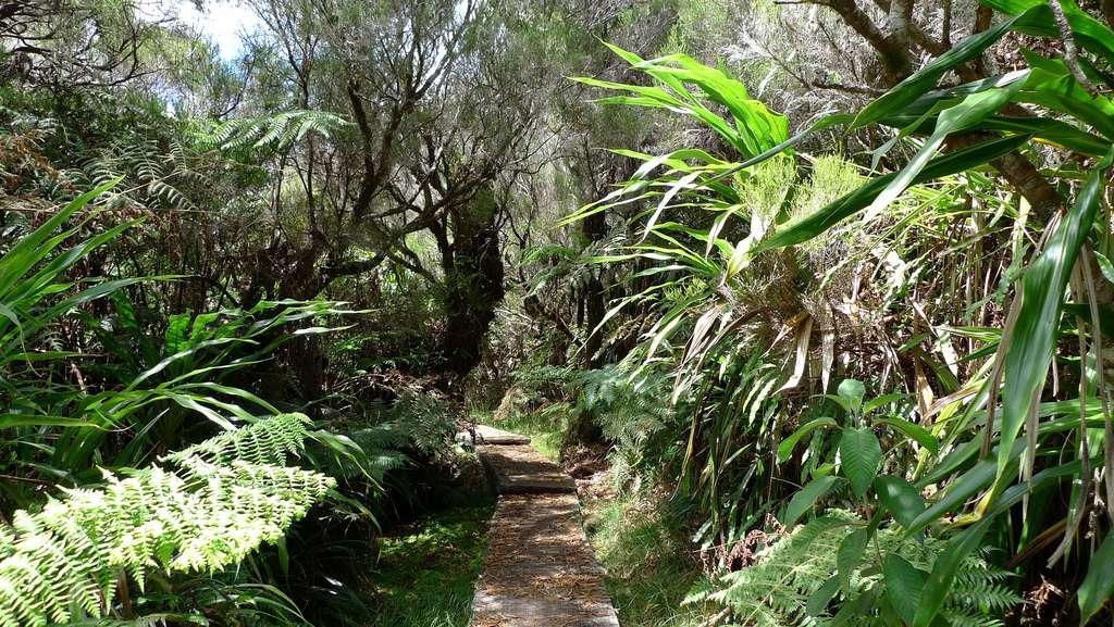 Forêt de Belouve