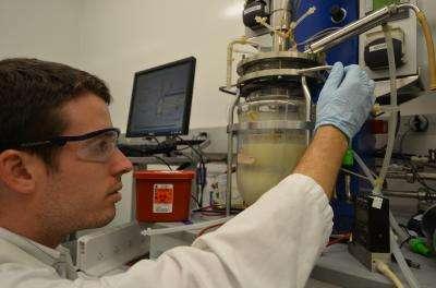Zachary Baer de l'University of California à Berkeley sépare l'acétone et le butanol (en haut dans la chambre de fermentation) du milieu contenant les bactéries Clostridium (en bas). Ce qu'il reste dans le système sera utilisé pour produire du biodiesel. © Robert Sanders photo