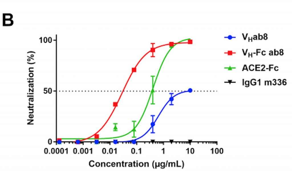 Sur cette figure qui concerne les analyses in vitro, les scientifiques ont déterminé le pouvoir neutralisant de Vhab8, de VH-Fc ab8 (l'anticorps fusionné), d'un fragment d'anticorps qui se fixe sur ACE2 et de l'IgG1 qui n'a aucune affinité pour le coronavirus ou le récepteur ACE 2 (contrôle). On voit que pour VH-Fc ab8, la concentration nécessaire pour neutraliser 50 % des virus est plus faible que pour les autres cas, un peu plus de 0,01 µg/mL. © Wei Li et al. The Cell