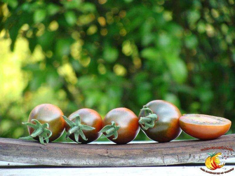 La tomate Prune noire, originaire de Russie, a une saveur très douce. © Tomodori