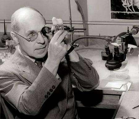 Le généticien H.J. Muller qui démontra que les rayonnements ionisants provoquaient des mutations.