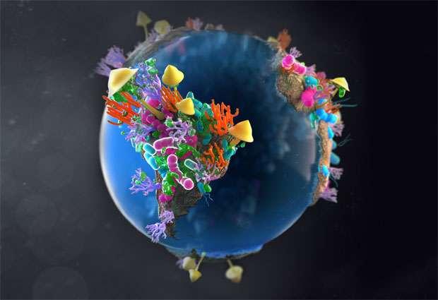 Cette étude pourrait permettre de préciser comment les gènes qui conduisent à la résistance aux antibiotiques se propagent. Et de localiser les endroits dans lesquels la production d'antibiotiques naturels est la plus élevée. © Hildebrand/Krolik incollaboration with Campbell Medical Illustration, EMBL