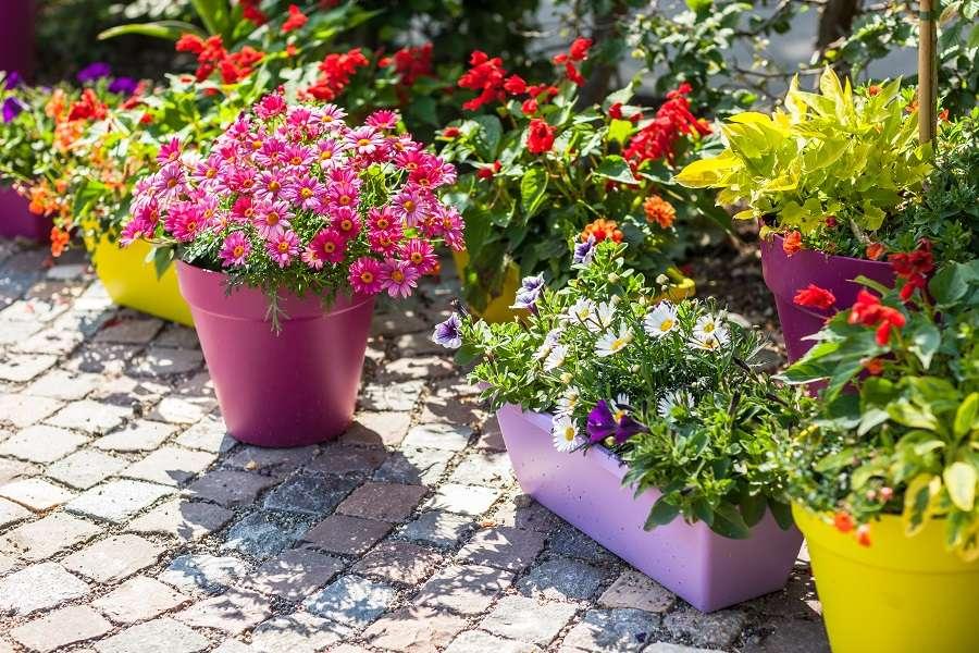 En choisissant un pot ou une jardinière en plastique, vous aurez un choix plus large de couleurs. © Brebca, Adobe Stock