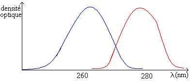 Exemple de spectrographe d'acide nucléique et de protéines