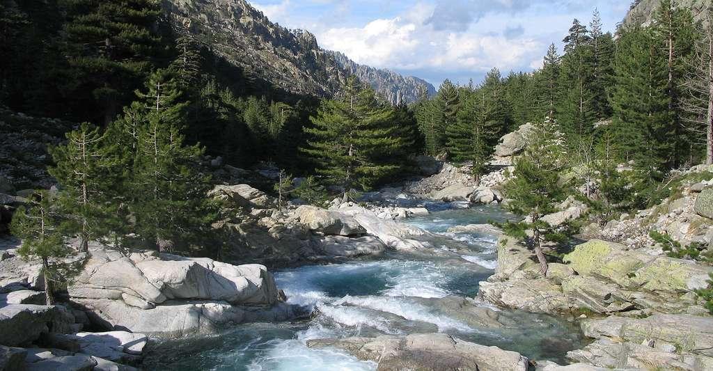 Gorges et rivière de la Restonica, Haute-Corse. © Altagna, Wikimedia commons, CC by-sa 2.0-FR.