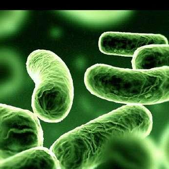 Bactéries pathogènes, virus et vers peuvent contaminer de nombreux aliments. Mais tous ces agents infectieux ne se comportent pas de manière identique. Mieux vaut donc apprendre à connaître leur talon d'Achille pour lutter contre eux. © Inra DR