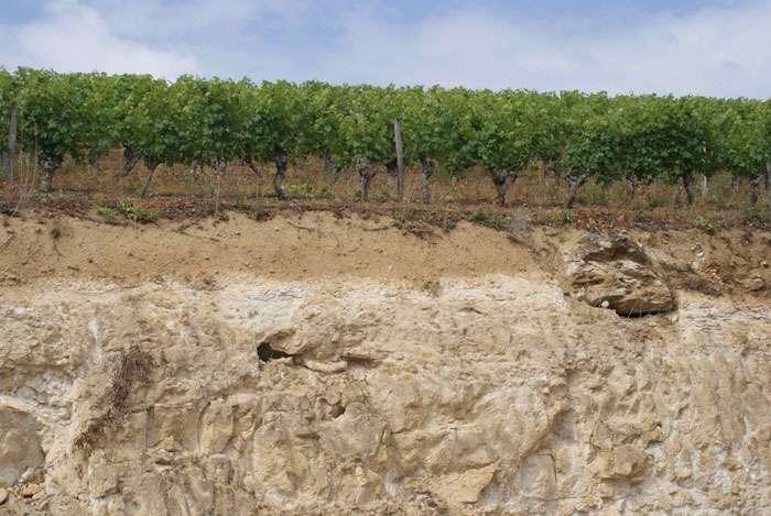 Ce talus de Cravant-les-Coteaux, près de Chinon, montre une vue en coupe du sol et du sous-sol : quelques décimètres d'une terre ocre que prolongent en profondeur des bancs calcaires (le célèbre tuffeau de Touraine) où le cabernet puise ses arômes. © C. Frankel
